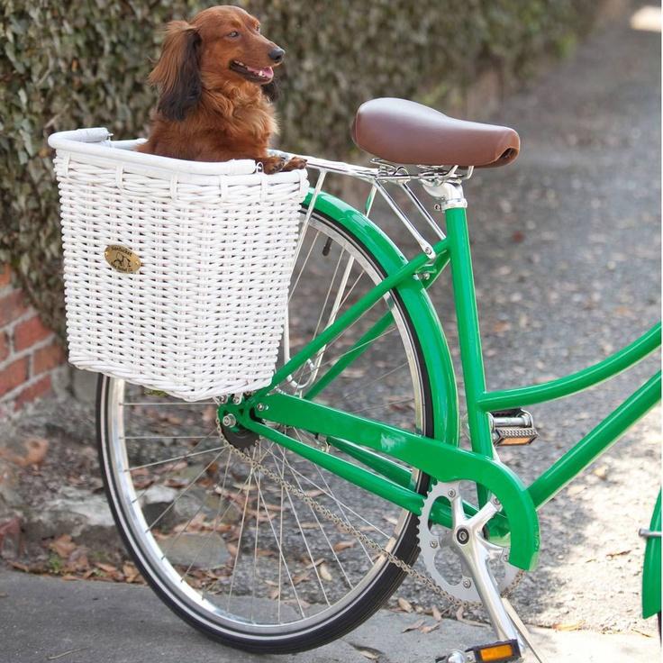 Вы, велосипед и собака: 6 секретов приятной и полезной прогулки
